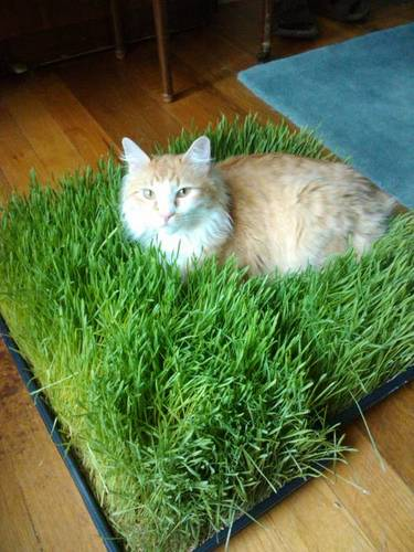 cat bed with grass