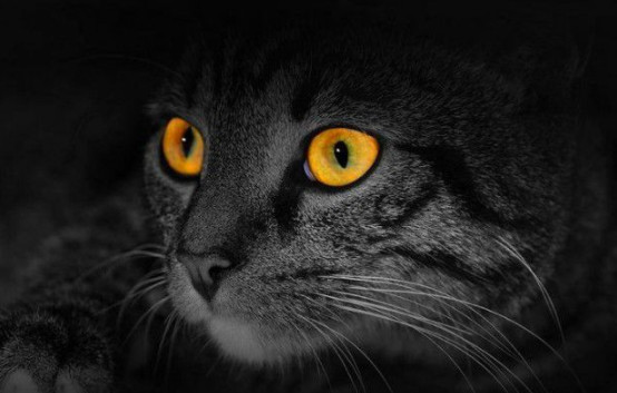 cats have night vision