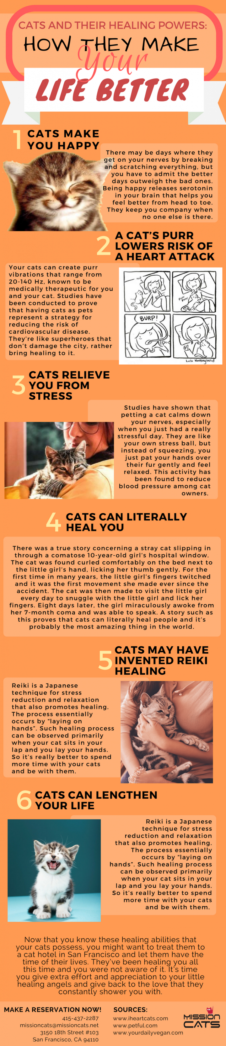 Cats and their Healing Powers: How they Make Your Life Better